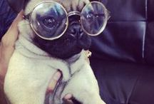 Pugs and other cute creatures