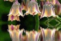 Plantas x Flores