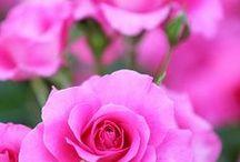 Shades of pink / Odcienie różu dla typów urody