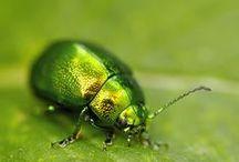 Shades of green / Odcienie zieleni pasujące do różnych typów urody