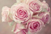 PHOTOGRAPHY: Roses / Róża, róża... :)