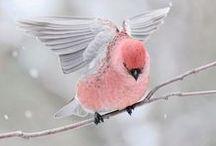 Birdie Birds.............