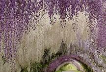 inspiratie voor in de tuin... / potjes bakjes hobbeltjes en bomen...
