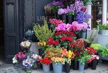 I love florals / by Sarah Higginbotham