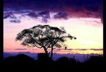 * UNDER AFRICAN SKIES * / by *~*Amanda Latuske*~*