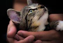 Chats - chiens - et autres animaux domestiques