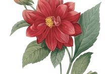 Botanic flowers / botanic flowers