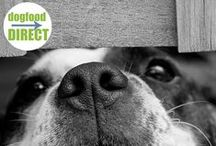 Blog Posts - DogFoodDirect.com / DogFoodDirect.com has been delivering the highest quality, healthiest, all natural, organic, holistic and super premium pet food, treats, supplements and supplies that your dogs and cats will love, and best of all; they come right to your front door. You'll be shopping from the comfort of your own home. Never run out of food with our auto ship program. You can count on DogFoodDirect.com for all of your pet's nutritional needs.