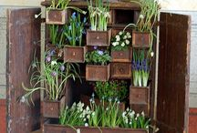 Pots and container gardens