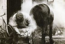 The Farrier / The Farrier forges the horses shoes comdining blacksmith skills with some veterinarian skills to care for the horses feet