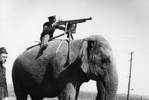 Animals of ww1 / Aminals were a vital part of the armies of WW1