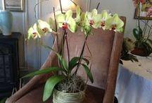 Orchids | succulents