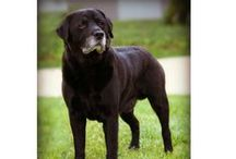 Senior Dog Tips and Tricks / What to expect with your senior dog