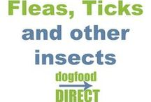 Fleas, Tick and other Insects / Flea and tick information, treatment and tips