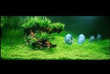 Aquascape Inspirations / I'm dreaming of setting up the most beautiful aquascape ever - until then I can dream and gather inspiration!