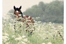 ~ HORSES ~