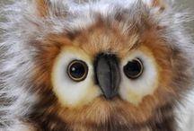 Owl♥♥