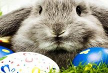 Easter Fun and Gift Ideas / Spring time fun and gift ideas for Easter.