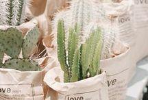 Terrariums, succulents, plants & kokedama / Plant envy 101