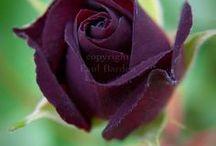 Flowers & Gardens / by Diane Smith