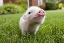 Pig Love / by Katelyn Gansmann