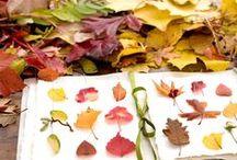 Autumn Inspiration | Осеннее вдохновение