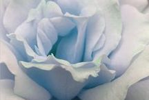 all things pale blue, pale green, or gray / Items in pale blue, pale green, or gray / by Cheri Rhodes