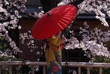 Japan <3 / by Valentina Tanzillo