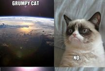 So Funny / Hilarious. Any kind of hilarious! From cats, to geeks, to ppl falling over. Just anything.