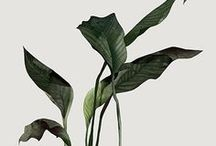 p l a n t s • f l o r a / Plants Are Friends