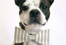 > < Pets > < / Pets also wear bowties.