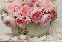 Roses, flowers and bouquets