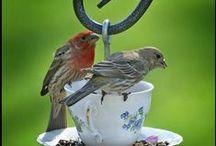 Birdhouses, Feeders, Mailbox Gardens. /  Ideas.