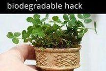 Garden Ideas.