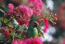 Australian Native Plants.