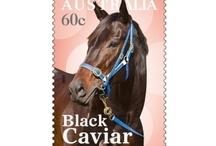 Black Caviar. / Australia's Favourite Horse.