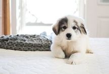 Animals / The cutest and fluffiest baby animals (mostly dogs haha)