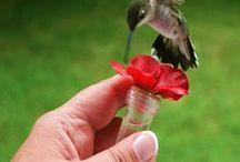 Amazing Birds.