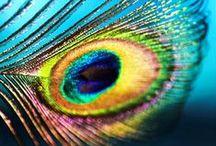 Me! / A visual insight into my random mind.....Or rather, a random insight into my visual mind.