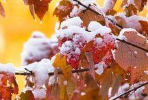 Snow in Autumn.
