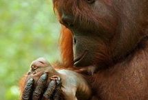 A Mother's Love. / No bond is stronger ...