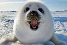 Animalia / Squeeee! / by R G