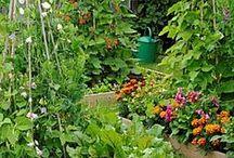 Herbs & Gardens / We LOVE Plants!