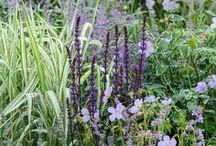 Precedents: PAD love PLANTS / plants that we love to use in our garden designs