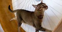 Kattenspeeltjes & meubeltjes / Katten lifestyle :-)