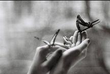 Butterflies / by Kirsten Anderson