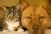Mississippi Veterinarians Who Practice One or More Modalities in Holistic and Integrative Veterinary / http://www.bestcatanddognutrition.com/roger-biduk/list-of-900-u-s-holistic-integrative-veterinarians/