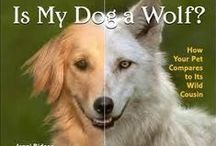 Best Cat and Dog Nutrition (BCDN) Website / A very thorough 38 page website about allopathic, holistic/integrative veterinary, cat/dog nutrition and what pet food companies, Big Pharma and bad veterinarians don't or won't tell you. http://www.bestcatanddognutrition.com/