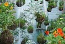 Gardening / plants, garden..