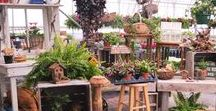 Greenhouse at BackHome-onTheFarm / Annuals, Container Gardens, Herbs, Vegetables and more!
